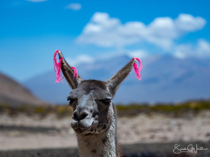 Peru-14102019-215.jpg