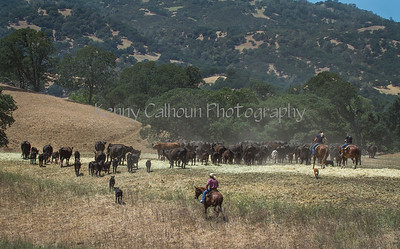Yolo Land & Cattle May 25, 2014