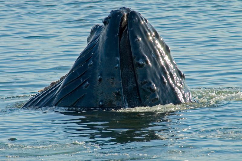 AK_Whales-15.jpg