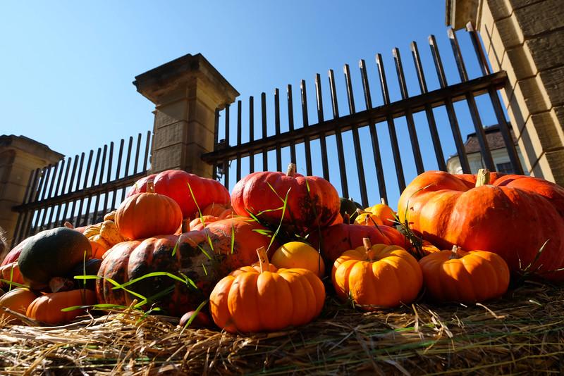 Ludwigsburg_Pumpkin_151003_003.jpg