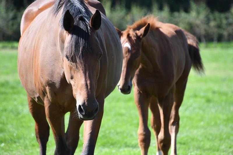20190915 Ponies bij Jose GVW_4843.JPG