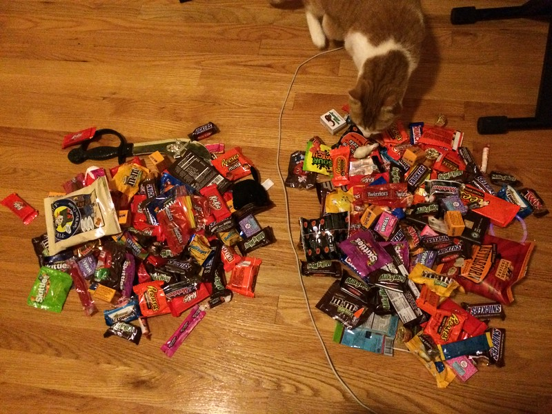 Izzy inspects the haul.