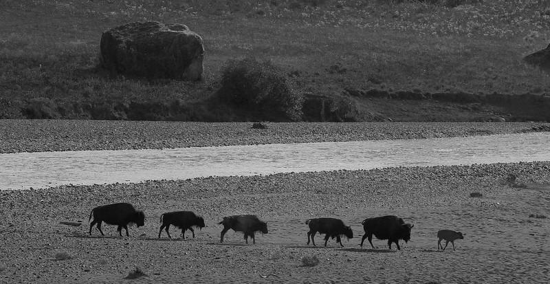 Yellowstone_10.jpg