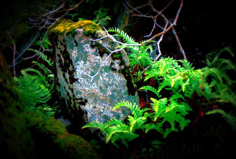 stone twigs ferns 1-9-2009.jpg
