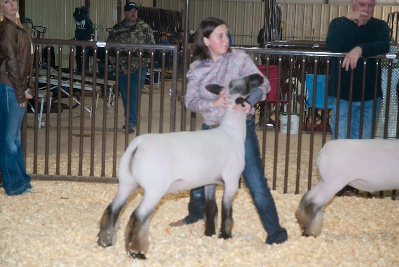 kay_county_showdown_sheep_20191207-104.jpg