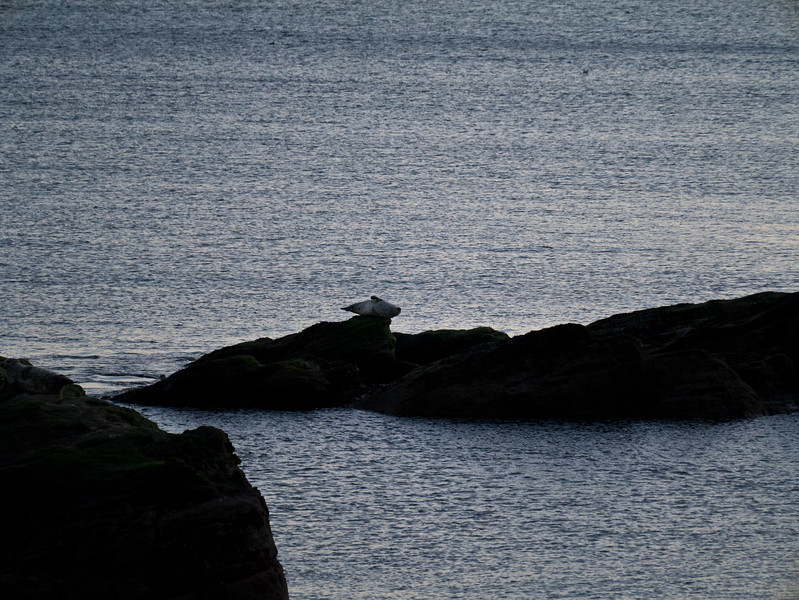 Seal by Seafield tower