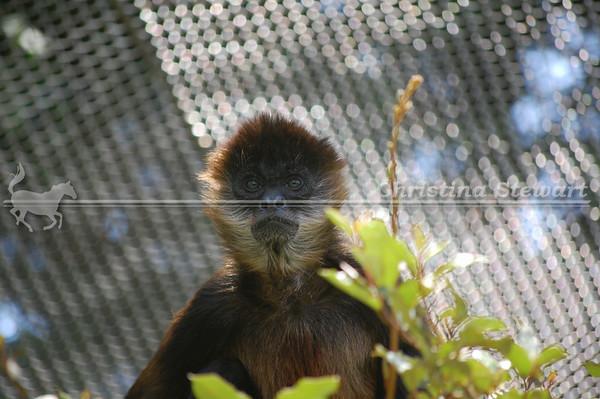 Chattanooga Zoo 2009