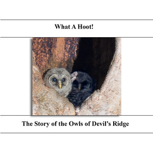 The Owls of Devil's Ridge - The Book