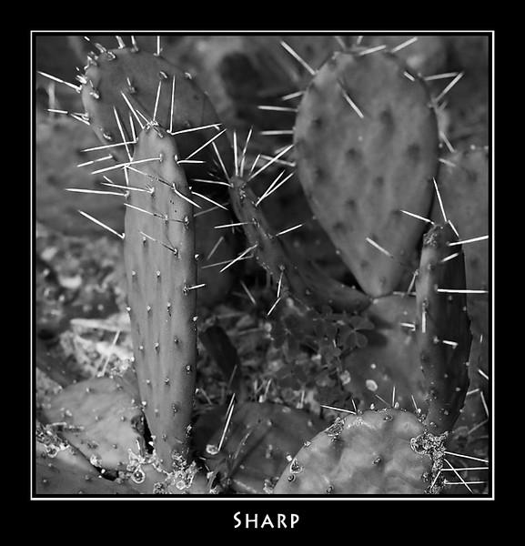 Sharp ©John Green