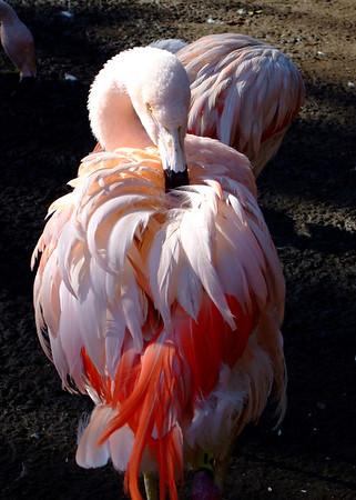 Santa Barbara Zoo, January 2007