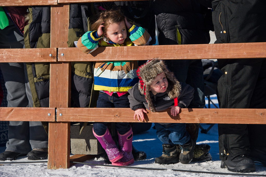 . Young fans peek down the chute at the start of the Iditarod Trail Sled Dog Race on Sunday, March 2, 2014, in Willow, Alaska. (AP Photo/Anchorage Daily News, Marc Lester)