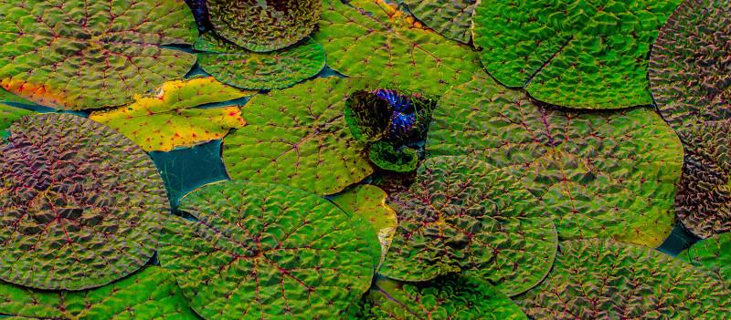 GREEN PADS FOREST PARK SAINT LOUIS