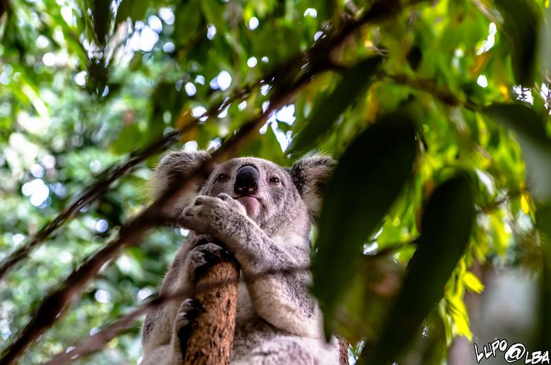 Australia-1131.jpg