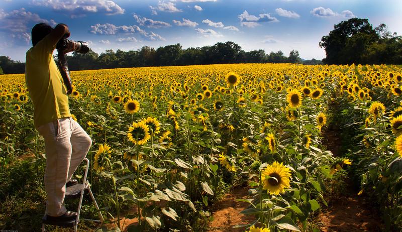 Sunflower-1-1.jpg
