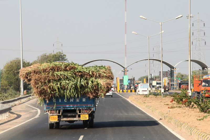 Carrying crops.