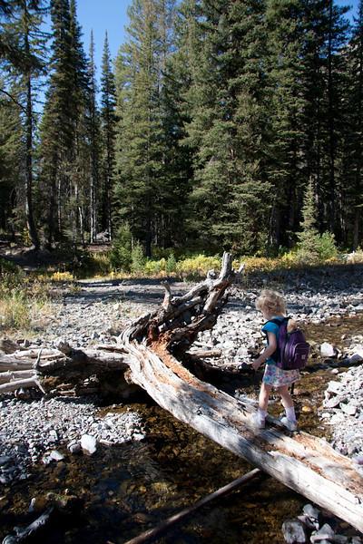 Working on log walking skills.