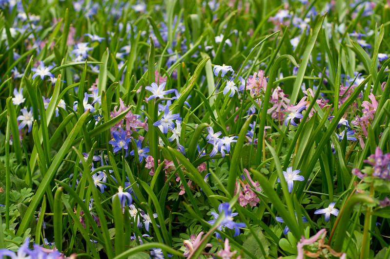 Springflowers in full bloom