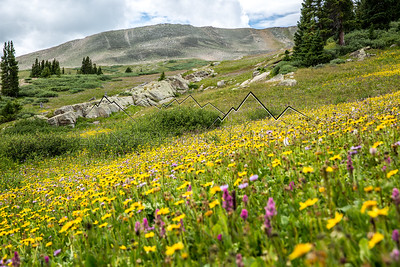 Flowers along the Colorado Trail