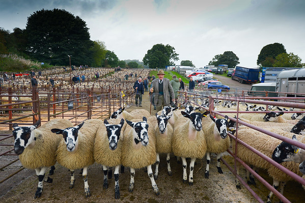 MTH Lazonby Gimmer Sale Sep 2016