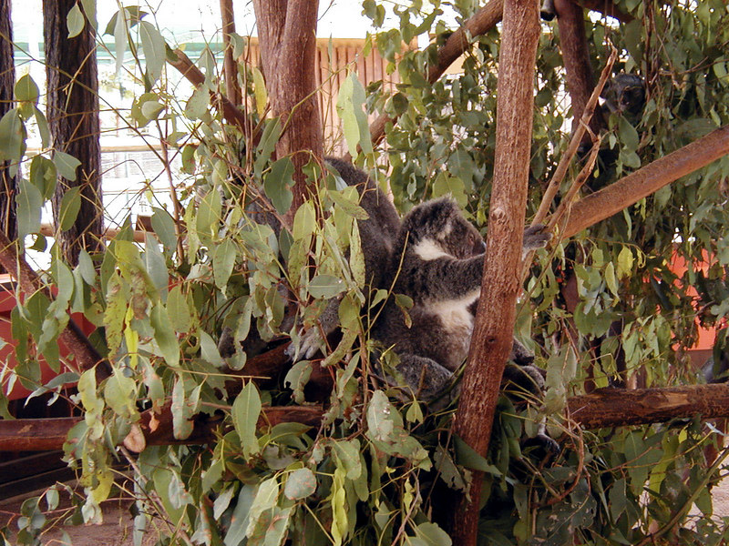 15.  Australia Zoo.JPG