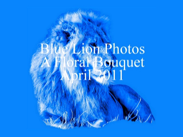 Blue Lion Photos - Floral Bouquet