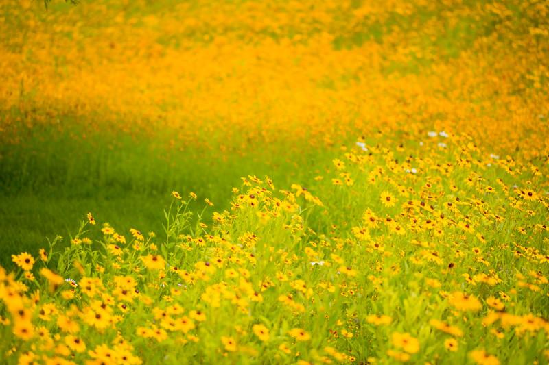 FLOWER LEAF FIELD-72.jpg