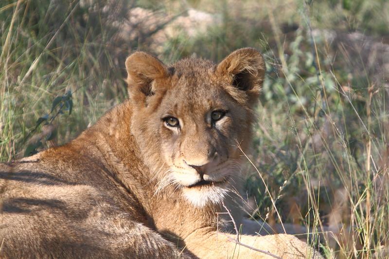 South Africa, Zimbabwe and Botswana Safari