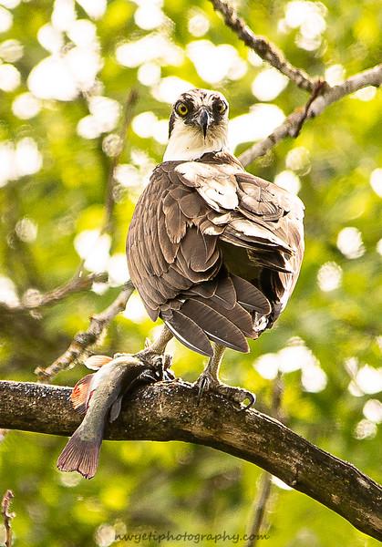 Great Blue Herons-702.jpg