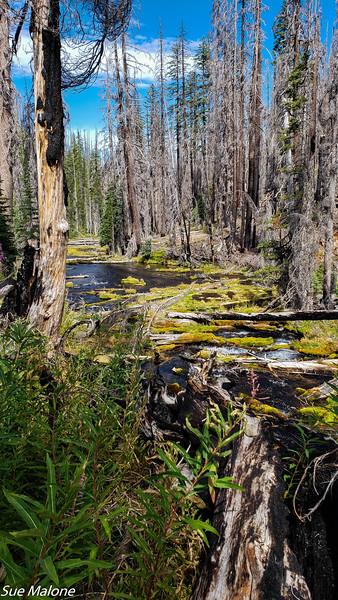 08-18-2020 Boundary Springs Hike-15.jpg
