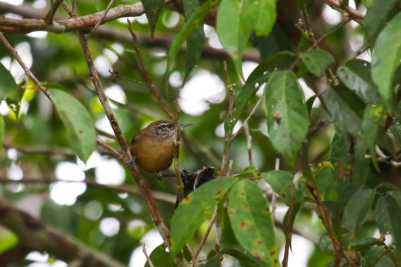 Tahuayo Reserve, Amazon Basin, Peru