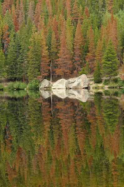 reflectionsBearLake.jpg