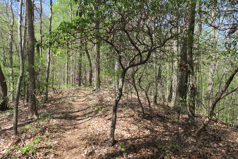 Ridge Trail - 2,850'