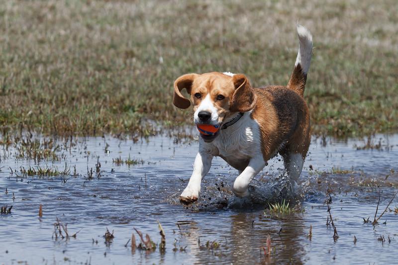 Waterdog Brody