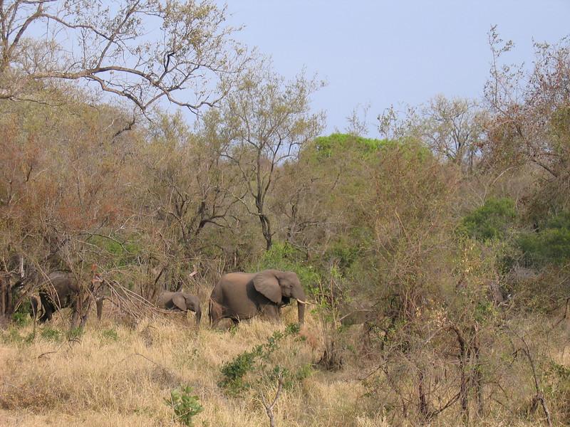 On safari Kruger 5.JPG