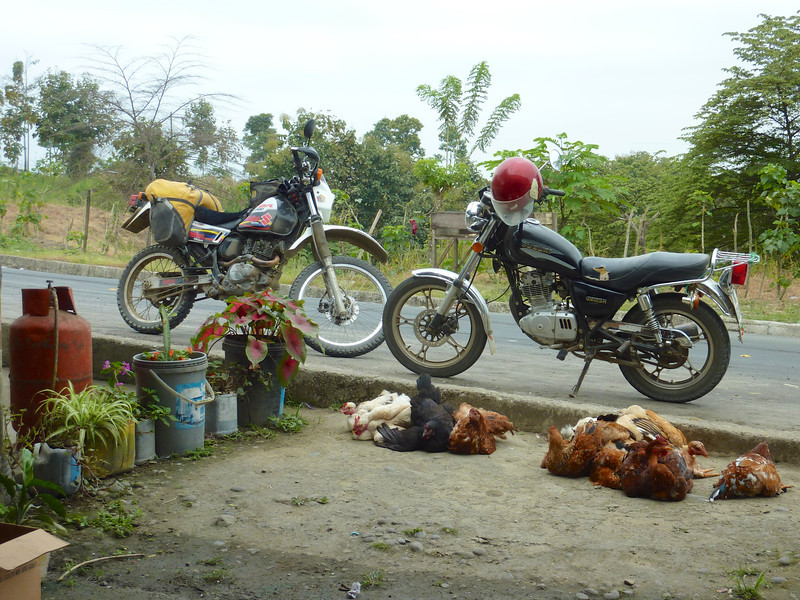 chickens going to market