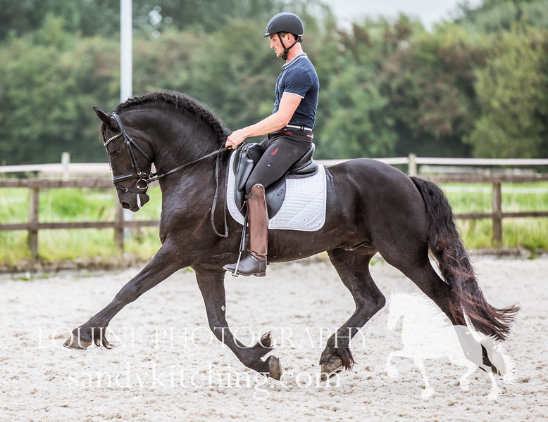 Approved_stallions_2016-5586.jpg