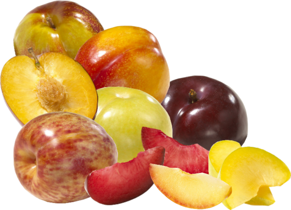 pluot group.png