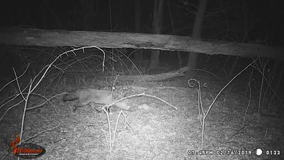 Wildlife Cam
