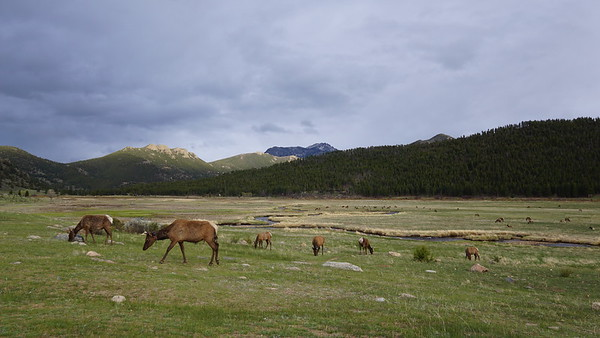 2019.06 Rocky Mountain NP (2)