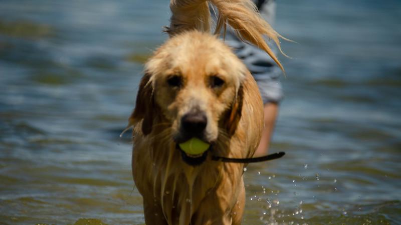PuppyParty18-433.jpg