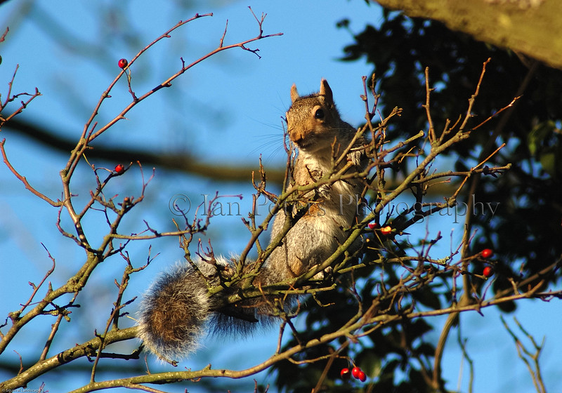 Squirrel Landscape 3