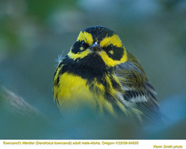Wood-Warblers
