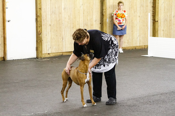 TTBC Boxer Specialty Obedience