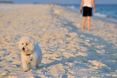 Pensacola Beach 2010