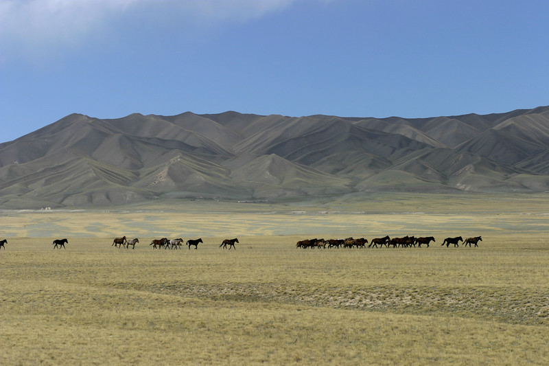KYGYZSTAN, near Naryn Horses running across the valley. Horses are raised for tansportation, meat and milk products throughout central asia. © Christopher Herwig / PHOENIX