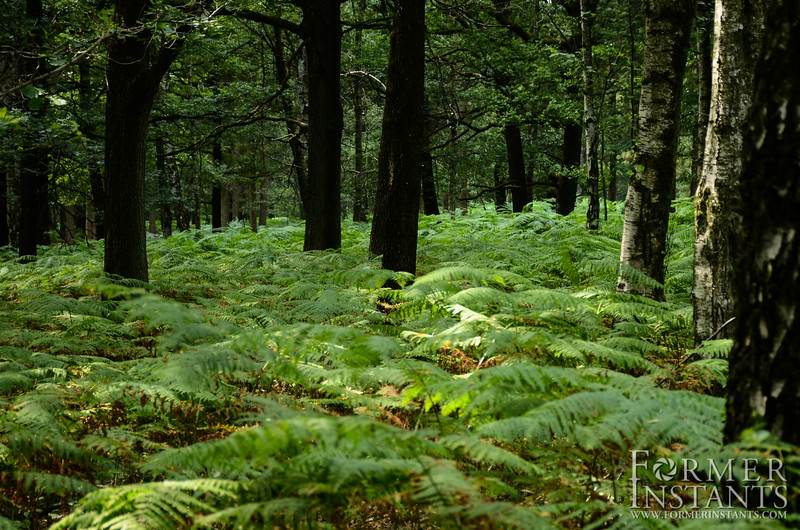 Carpet of Ferns