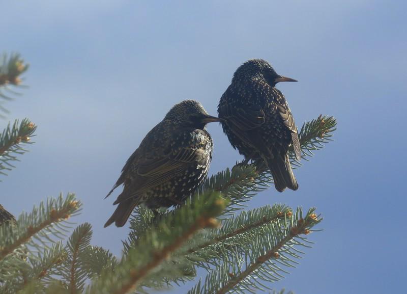birds (186).jpg