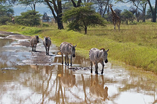 Africa:  Wildlife-People-Places