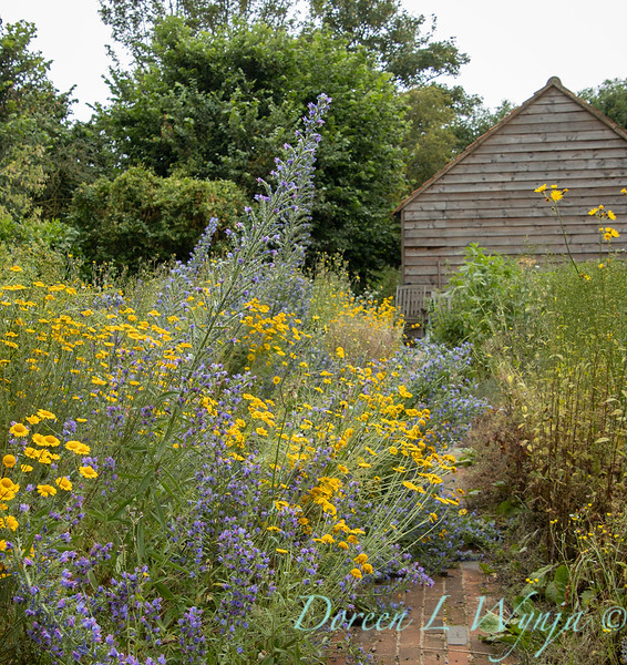 Beechleigh Garden - Jacky O'Leary garden designer_2965.jpg
