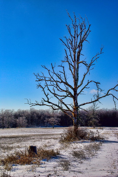 Ice Storm IV.jpg